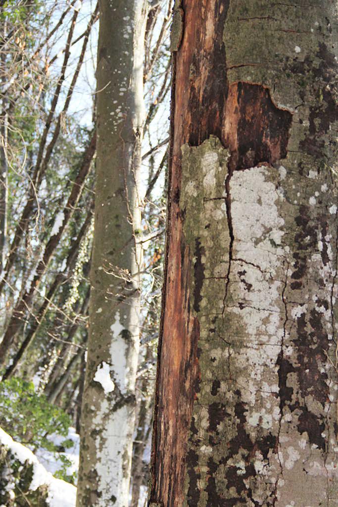 forestsecrets_photo_corinnacarrara_1024web