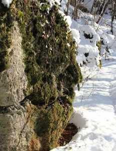 snowart_photo_corinnacarrara_1024web